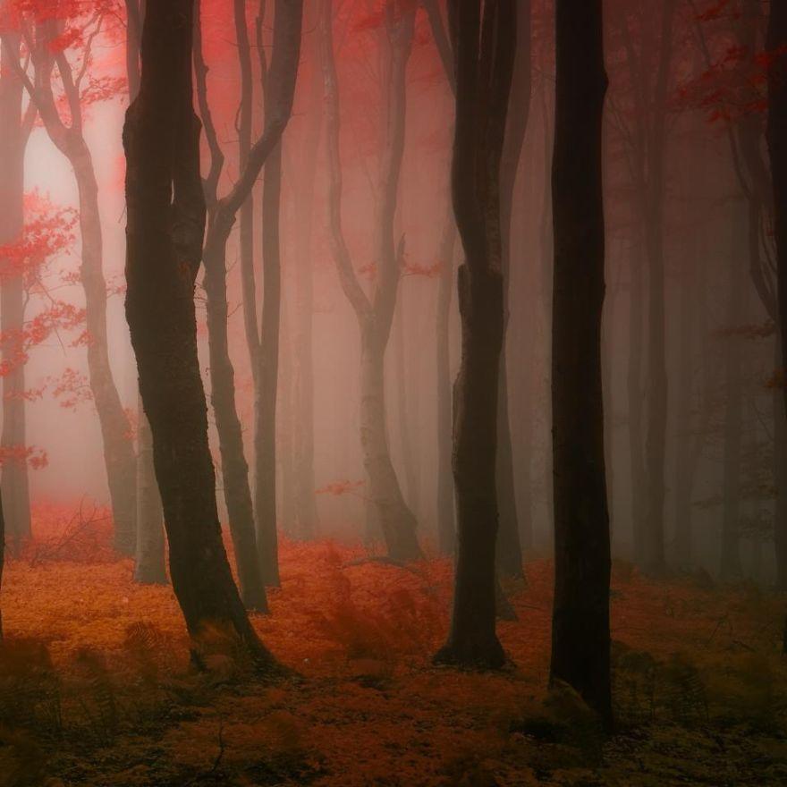 приказна червена мъгла
