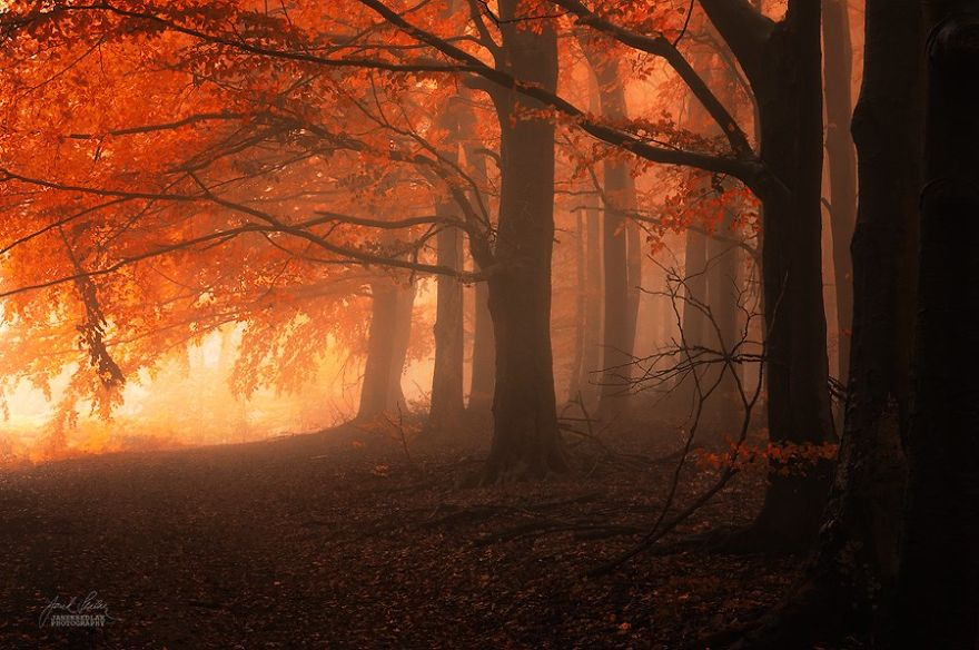 dreamlike-autumn-forests-janek-sedlar-17  880