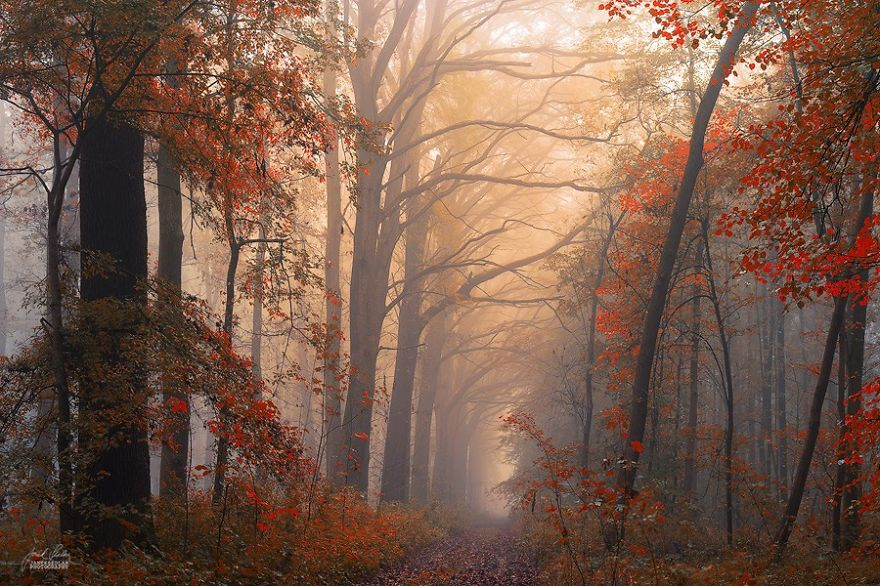 dreamlike-autumn-forests-janek-sedlar-38  880