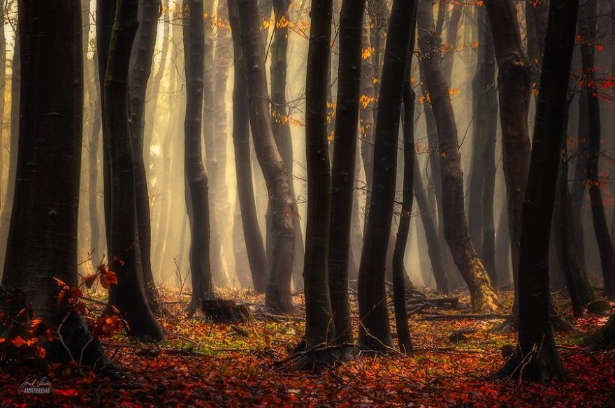 dreamlike-autumn-forests-janek-sedlar-41  880
